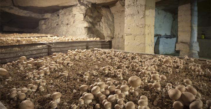 champignoni re les carri res champignoni re de montesson. Black Bedroom Furniture Sets. Home Design Ideas